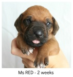red2weeks