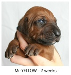 yellow2weeks