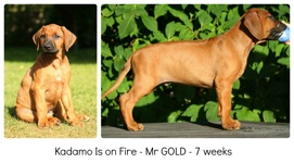 gold7weeks