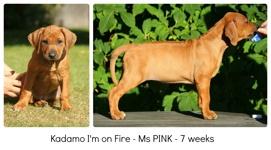 pink7weeks
