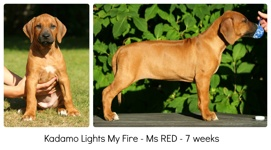 red7weeks