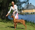 Int Österbybruk Mira BOB puppy 6 months old
