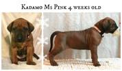 pink4weeks