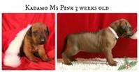 pink3weeks