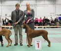 Moa Swedish Veteran Winner-14 8 years 5 months old