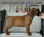 mr_blue6weeks