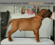 mr_orange6weeks