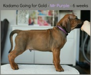mr_purple6weeks
