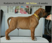 mr_yellow6weeks