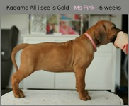 ms_pink6weeks
