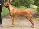 isidor2years9months1