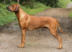 isidor2years9months2