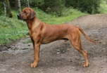 isidor2years9months4