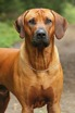 isidor2years9months5