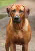isidor2years9months11