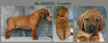 5weeks_orange