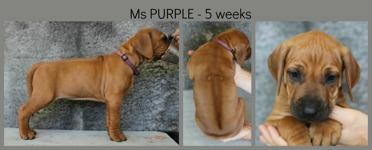 5weeks_purple