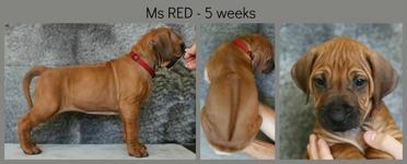5weeks_red