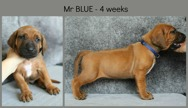 4weeks_blue