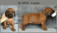 4weeks_green