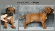 4weeks_brown