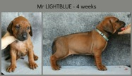 4weeks_lightblue