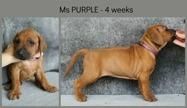4weeks_purple