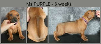 3weeks_purple