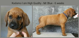 6weeks_blue