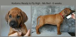 6weeks_red