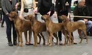 breedersgroup1