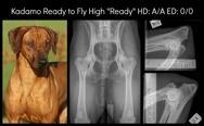 ready_HD_ED