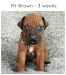 3wks_brown