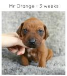 3wks_orange