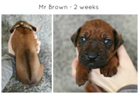 2weeksbrown