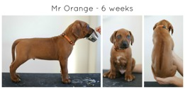 6weeks_orange