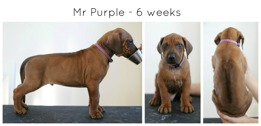 6weeks_purple