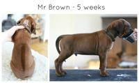 5wks_brown