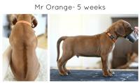 5wks_orange