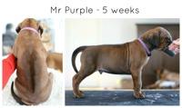 5wks_purple