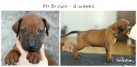 4weeks_brown