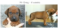 4weeks_grey