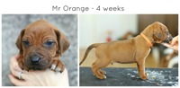 4weeks_orange