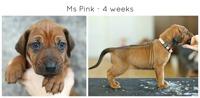 4weeks_pink