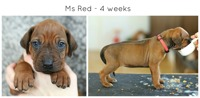 4weeks_red