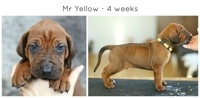 4weeks_yellow