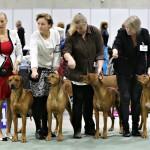 breedersgroup