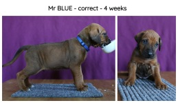 4weeks-blue