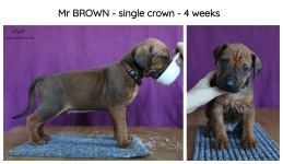 4weeks-brown