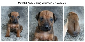 3weeks-brown